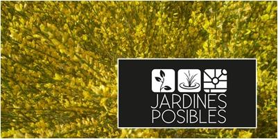 Jardinería - Diseño de jardines - Estanques en Galapagar
