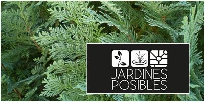 Jardinería - Diseño de jardines - Estanques en Guadarrama