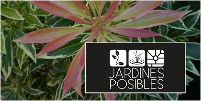 Jardinería - Diseño de jardines - Estanques en Soto del Real