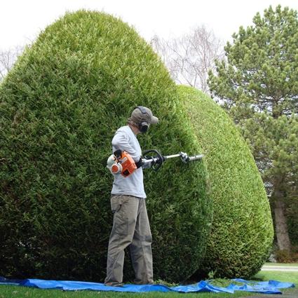 mantenimiento de jardines a empresas