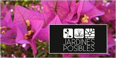 Mantenimiento de jardines en Miraflores de la Sierra