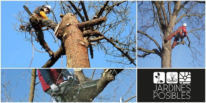 Poda, Tala y corte de árboles en San Sebastián de los Reyes