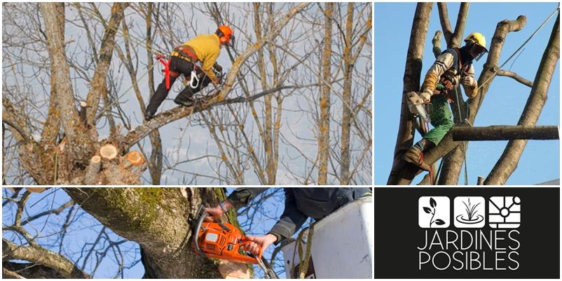 Poda y tala de árboles en Colmenarejo