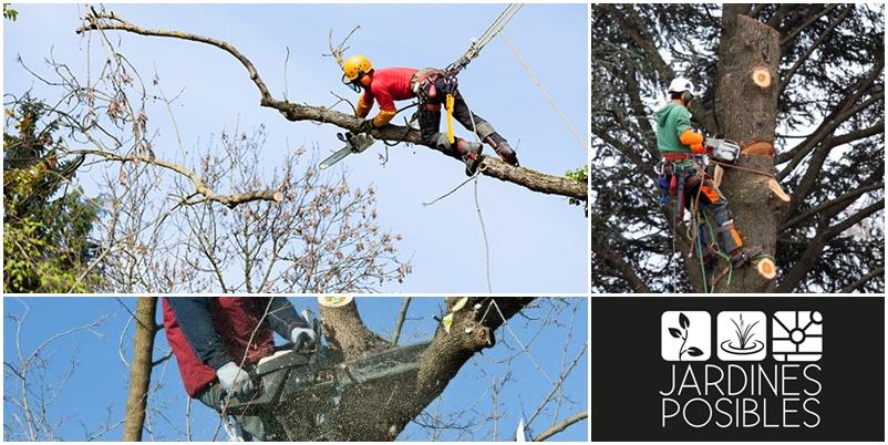 Poda, Tala y corte de árboles en Alpedrete