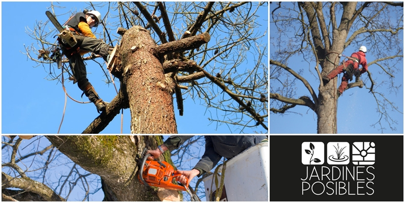 Poda, Tala y corte de árboles en Becerril de la Sierra