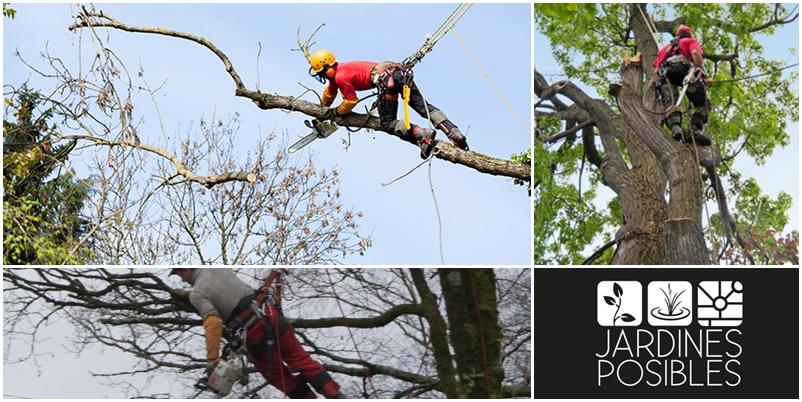 Poda, Tala y corte de árboles en Cercedilla