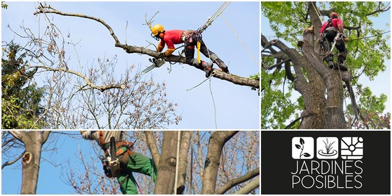 Poda, Tala y corte de árboles en Hoyo de Manzanares