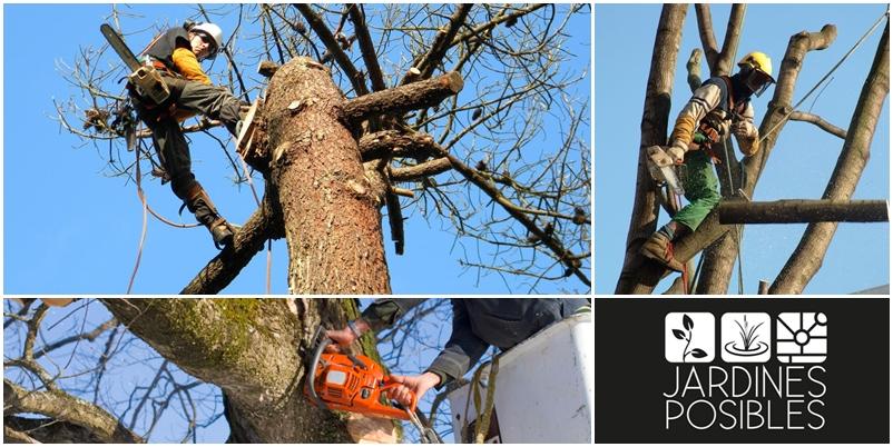 Poda, Tala y corte de árboles en Majadahonda