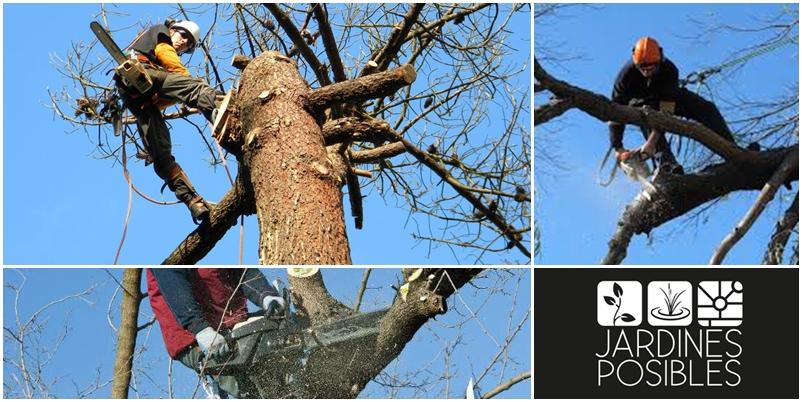 Poda, Tala y corte de árboles en Manzanares El Real