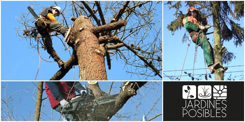 Poda, Tala y corte de árboles en Miraflores de la Sierra